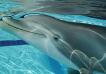Fabrican un delfín robot que podría reemplazar a los reales en los parques acuáticos