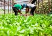 Agro: cuánto más paga el consumidor comparado lo que recibe el productor